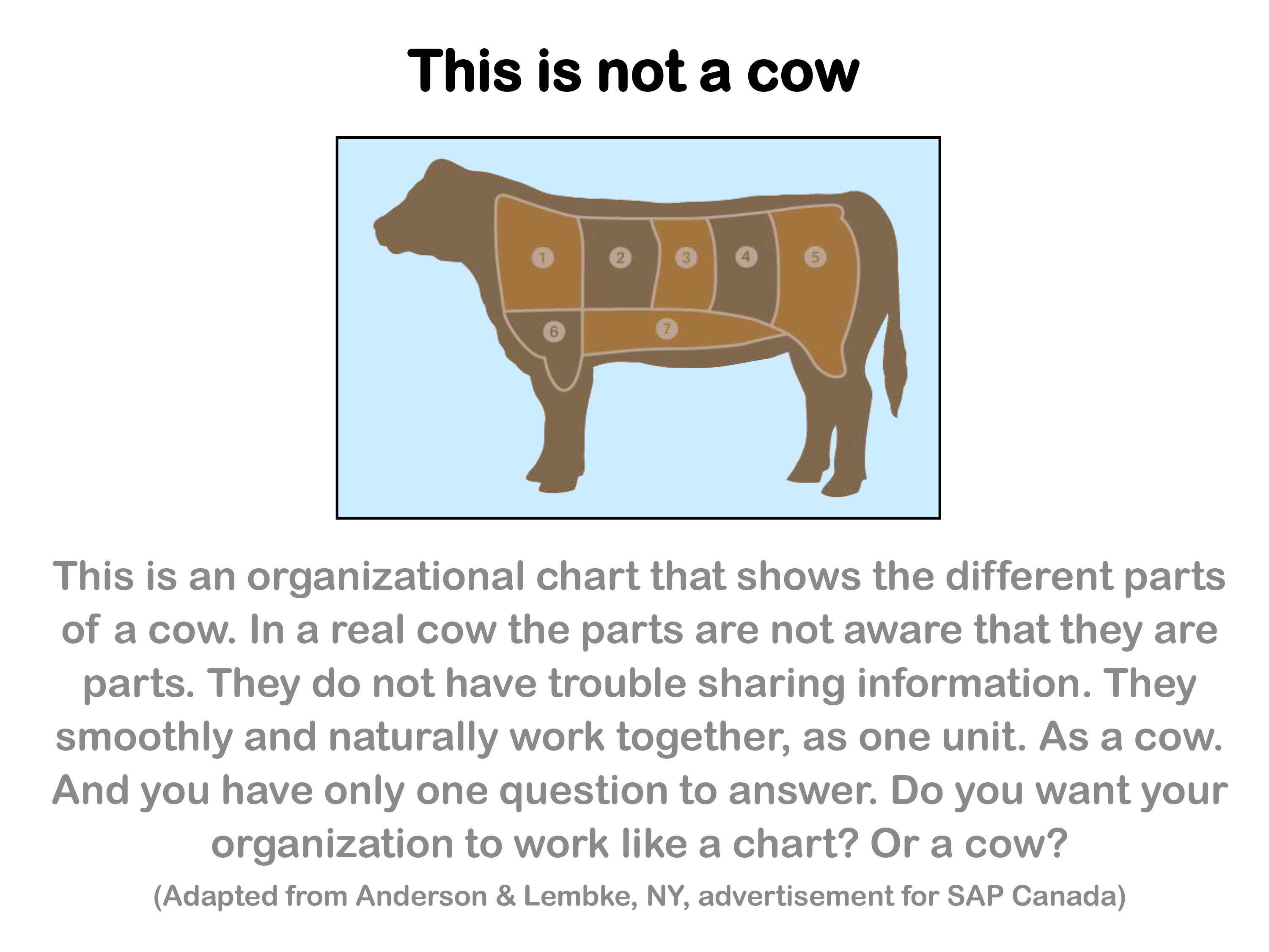 Working like a Cow by Walking like a Cow | Henry Mintzberg
